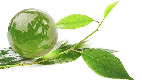 Il nostro impegno per un pianeta più verde